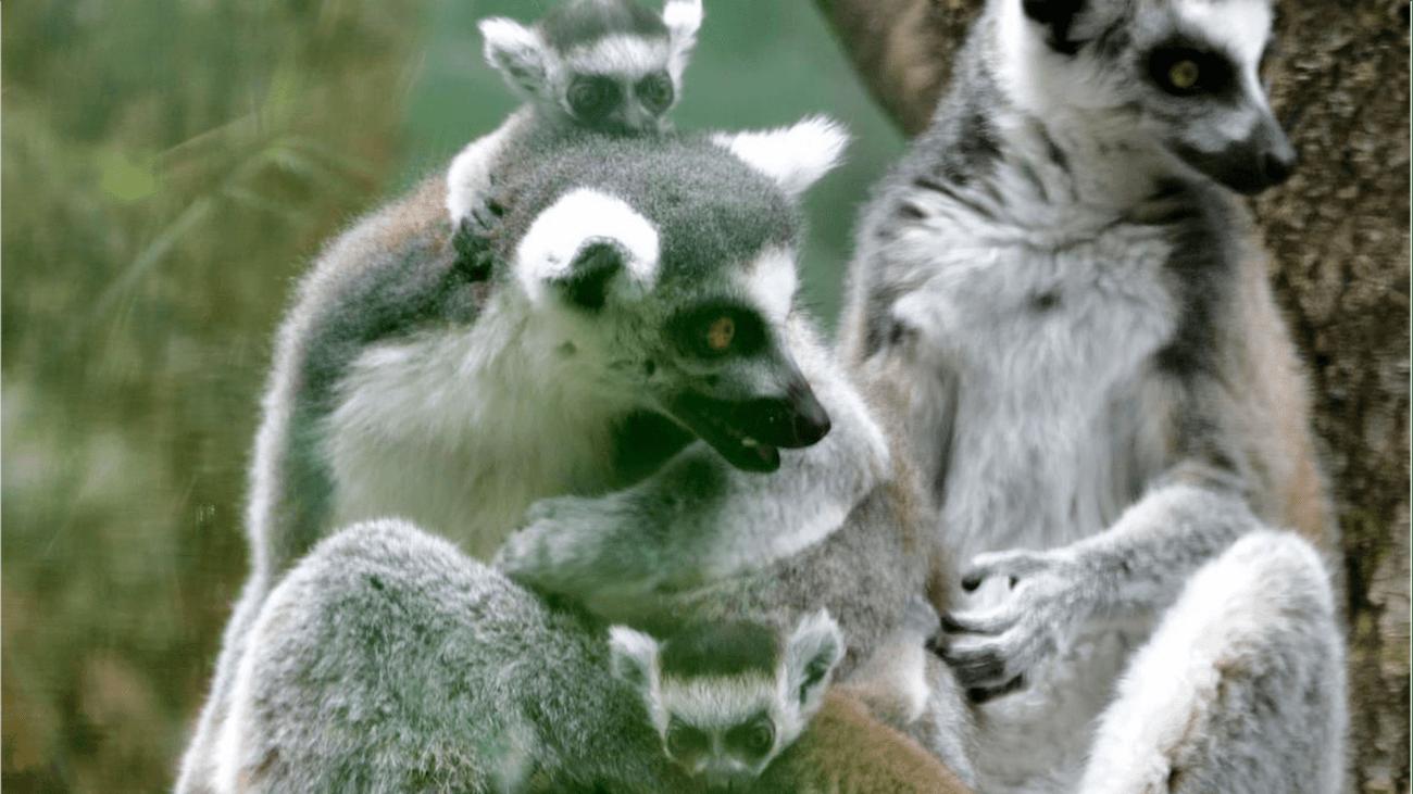 © Tierpark Hellabrunn / Gemma Borrell
